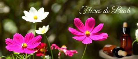 imagenes de flores de bach flores de bach la mejor informaci 243 n de la terapia floral
