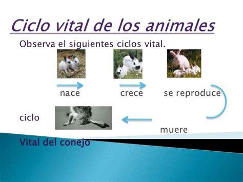 imagen para colrear del ciclo de vida conejo ciclo vital