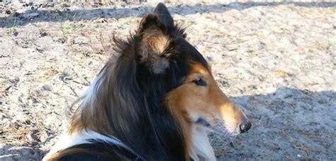 dati nazionale anagrafe canina ambulatorio veterinario suisio anagrafe canina e felina