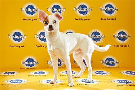 puppy bowl time puppy bowl xii 2016 tv start time live schedule and draft info