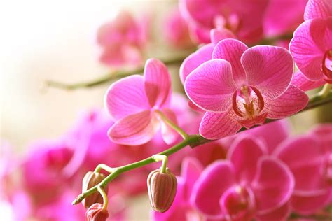 Easy Home Decor Projects tips for buying healthy orchids