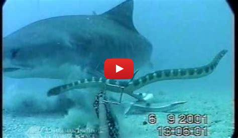 vs snake shark vs snake