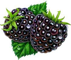 Illustration For Blackberry Q10 phone clipart blackberry pencil and in color phone