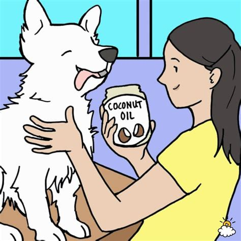coconut for fleas on dogs 3 best home remedies to get rid of fleas on dogs