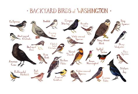 Backyard Bird Identifier by Washington Backyard Birds Field Guide Print Watercolor