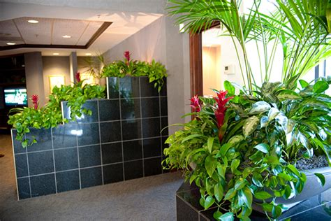 plants for the office benefits of indoor plants plant benefits alpha plant care