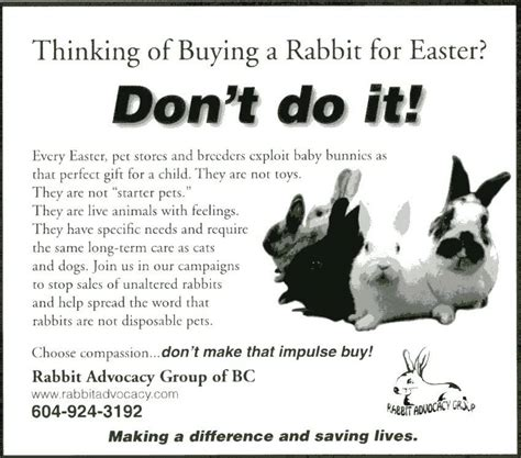 buy a house rabbit thinking about buying a rabbit f