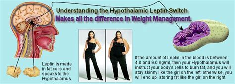 how does the leptin rx work living an optimized life super weight loss combo