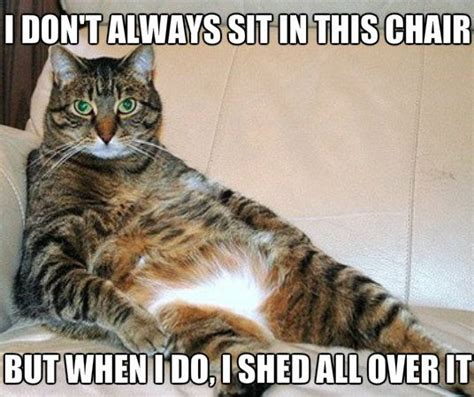 Football Cat Meme - quot just letting you know whose chair this is quot funny memes
