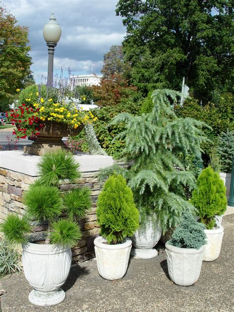 Evergreen Planters by Trees In Pots Garden Housecalls