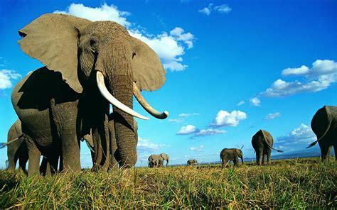 elephant wallpaper for pc elephant desktop backgrounds wallpaper cave