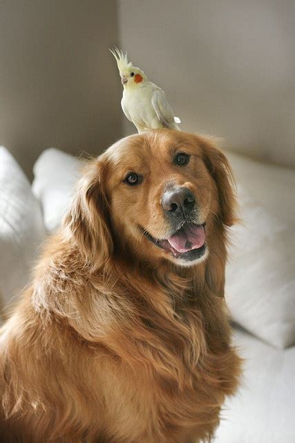 golden retriever with birds 18 things all golden retriever owners must never forget