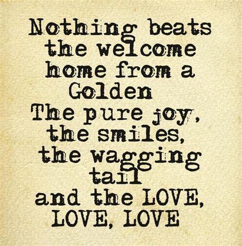golden retriever quotes quotes about golden retrievers quotesgram