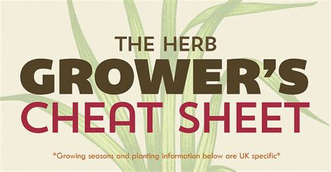 herb grower s cheat sheet the herb growing cheat sheet infographic good to be home