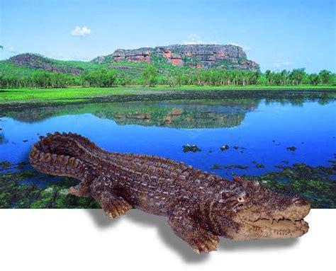 deko australien crocodile krokodil garten deko australien