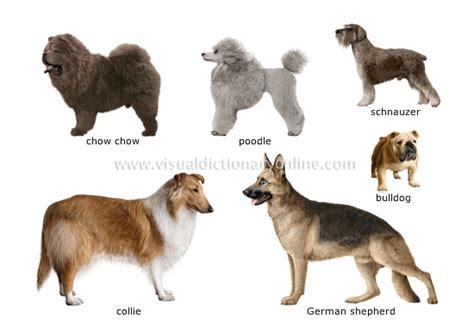 species canine animal kingdom carnivorous mammals breeds 1 image visual dictionary