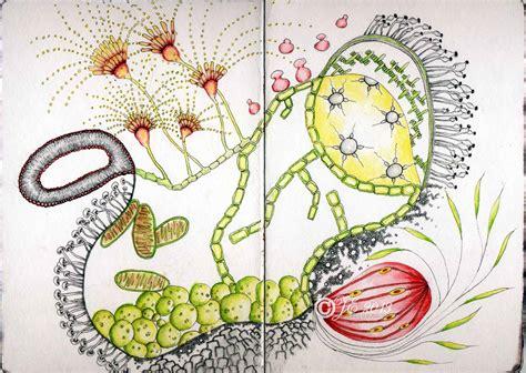 zentangle sketchbook project zentangle cardesque