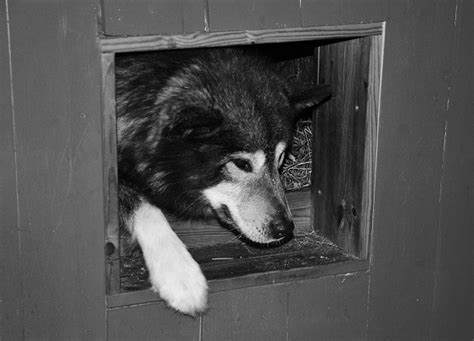 straw dog house dog quarters archive northernmost