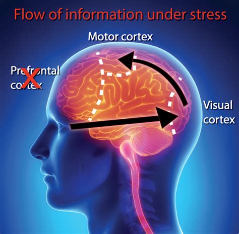 Brain Stress - could stress be shrinking your brain