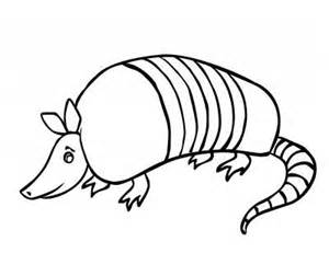 armadillo cartoon pictures clipart best ideas