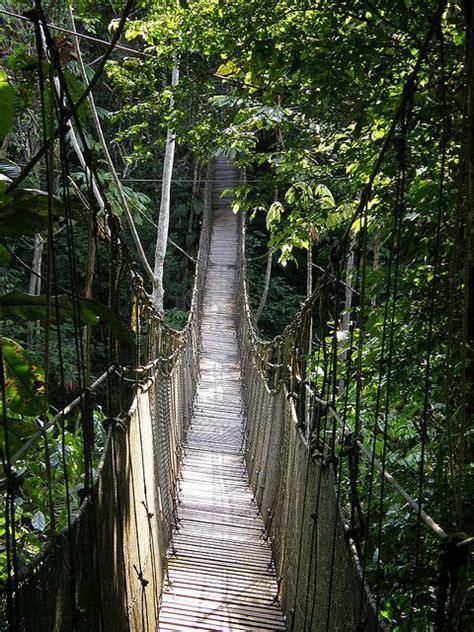 canopy amazon canopy walk amazon rainforest peru amazon rainforest