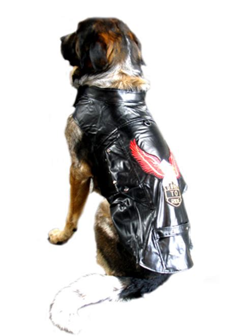 Motorcycle Apparel For Dogs by Dog Motorcycle Jacket Harness Born To Ride Black