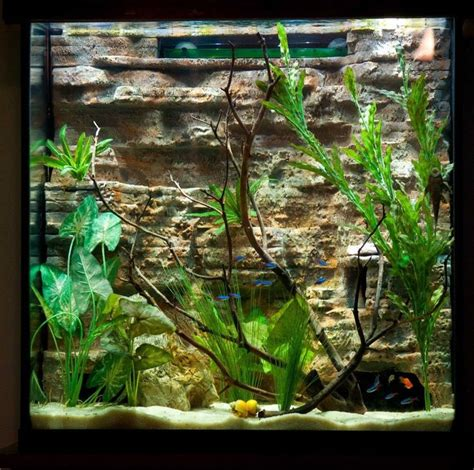 aquascaping tall tanks 21 best images about tank designs on pinterest african