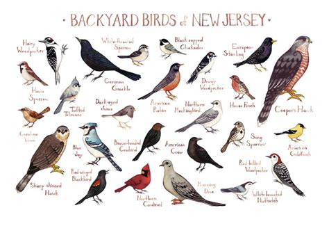 northern new jersey birds 2017 2018 best cars reviews