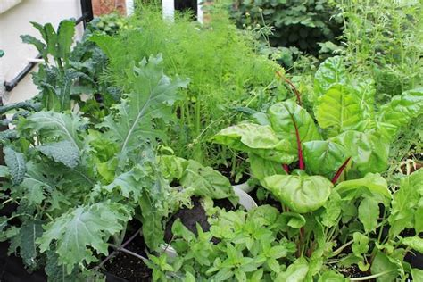 what garden vegetables like shade edible plants that grow in shade
