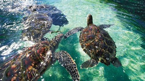 マウイ島旅行 格安旅行予約ならエクスペディア