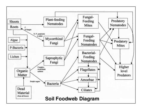 soil food web diagram microbial inoculants effective microorganisms em