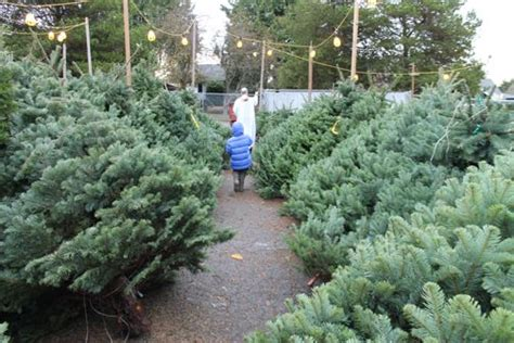 best seattle tree lot west seattle holy rosary tree lot opens 4 beneficiaries this year