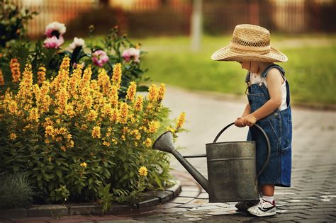Best Time To Water Vegetable Garden by The Best Time To Water Your Plants During A Heatwave
