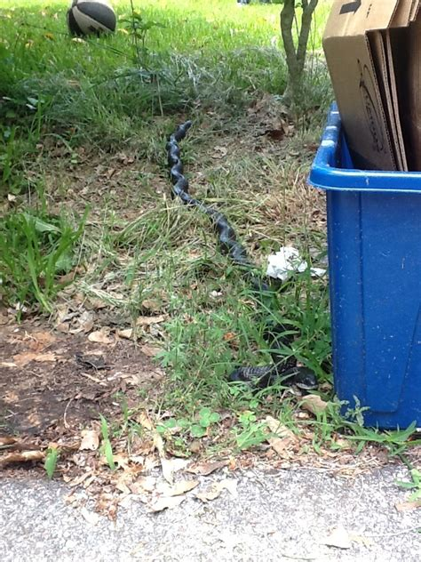 found a snake in my backyard living alongside wildlife readers write in what is this snake in my yard