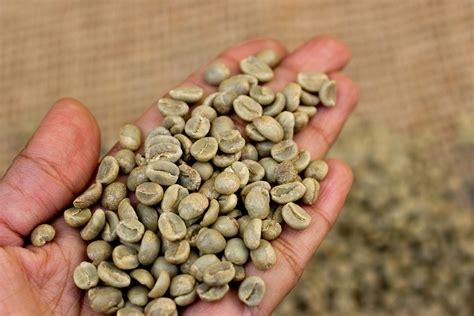 Coffee Robusta what s the difference between arabica and robusta coffee
