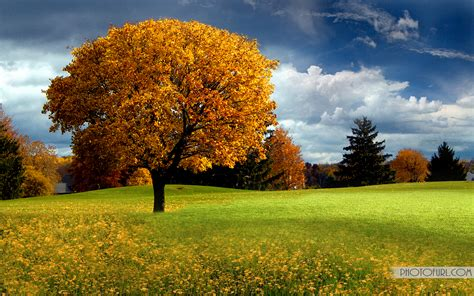 only nature beautiful tree wallpapers free cool natural scenery pictures of wallpapers for