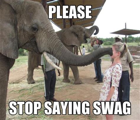 Elephant Meme - funny elephants pictures funny and cute animals