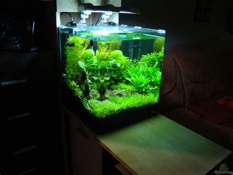 beleuchtung 60l aquarium aquarium christoph luz nano cube 60 liter