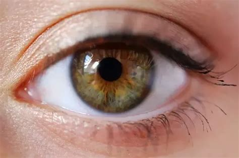 greenish brown color what s the difference between hazel and green