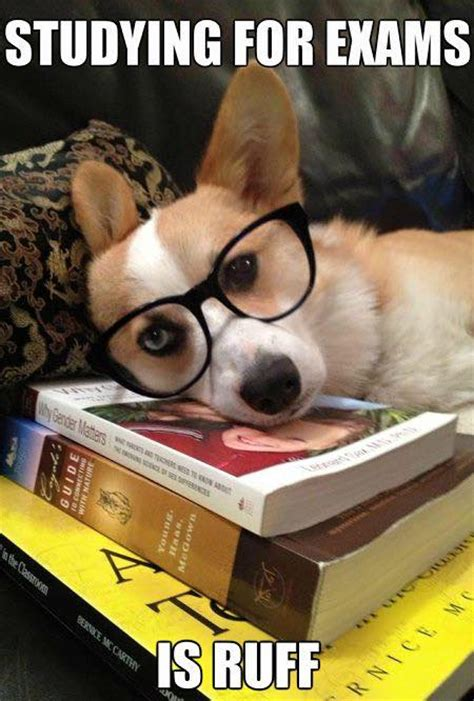 Funny Study Memes - studying for finals is ruff memes grade calculator