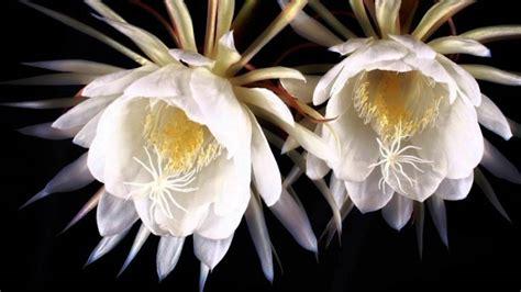 jenis tanaman hias lengkap beserta gambar  penjelasannya