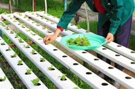 Aquaponic Starter Kit Malaysia aprendemos la t 233 cnica de los cultivos hidrop 243 nicos