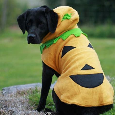 large dog halloween costume  dog pumpkin