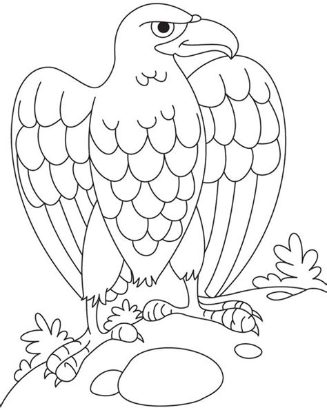 martial eagle coloring pages coloring pages eagles and coloring on pinterest