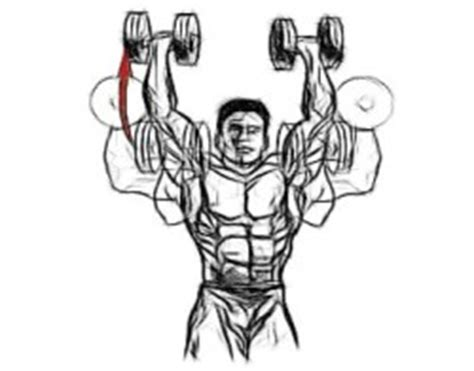 how to build big broad and wide shoulders fast 187 ultimate