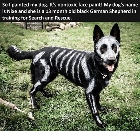 who painted dogs painted pictures photos and images for and