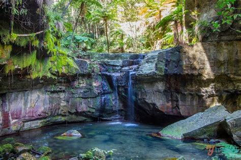 Water Fall Garden - go to carnarvon gorge national park you said