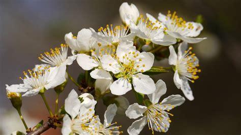 free photo bee flower free image on pixabay