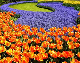 beautiful plants beautiful flowers