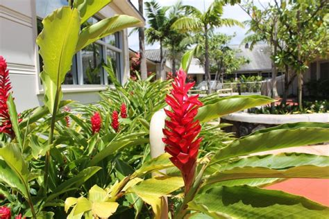 about maunalani maunalani nursing rehab center